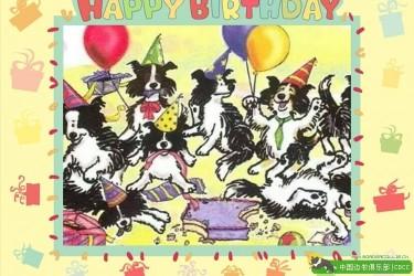 边牧一起庆祝生日快乐