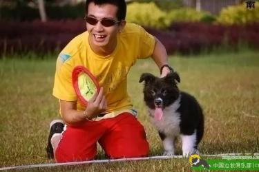 训练干货:飞盘狗巡回训练的原理和步骤(一)