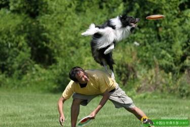 【拒绝忽悠】——运动犬的腰部结构与运动能力的关系