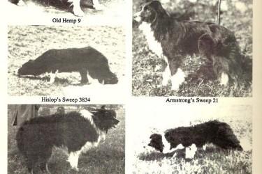 边境牧羊犬的4个类型 Border Collie Breed Information