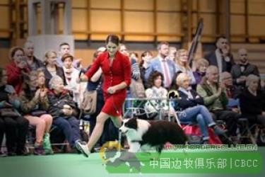 第一只代表中国出征英国世界顶级赛事Crufts的边境牧羊犬-雷神|BIS INT.Gr .(ch.cn)Aust ch Phkawidgee reflection