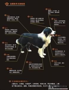 边境牧羊犬(Border Collie)AKC标准