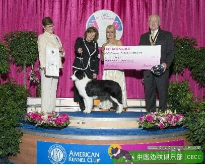 2014 AKC 优卡国家冠军展 边境牧羊犬组成绩
