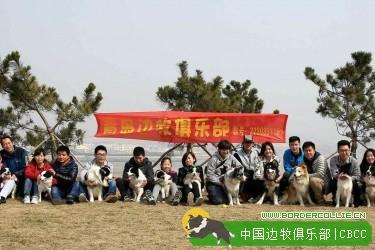 2015/3/21青岛边牧俱乐部周末沙子口草场海滩聚会精彩回顾