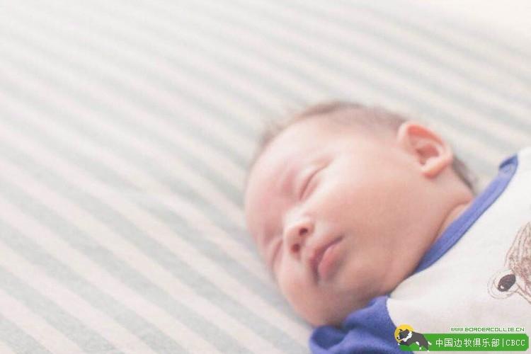 萌化人心的边牧与宝宝的瞬间