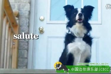 视频: 又是一只无所不能的边境牧羊犬神犬!