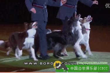 边牧跳舞视频:Heelwork to Music – Mary Ray's 2015 Performance – Crufts 2015