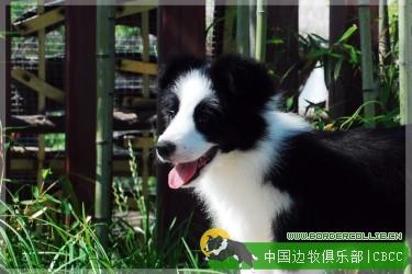 对幼犬进行训练的目标是什么?