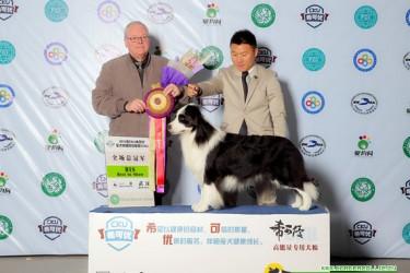2015年中国边境牧羊犬CKU排行榜