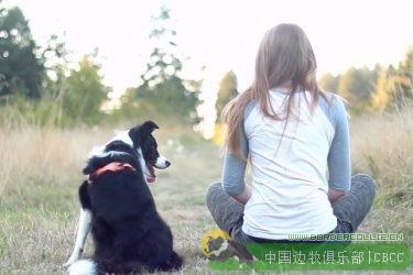 【边牧视频】拥有边境牧羊犬的日子里到哪里都是阳光普照!