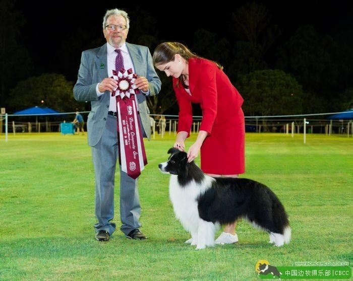 [边牧排行榜]2016年澳大利亚边境牧羊犬国家排行榜