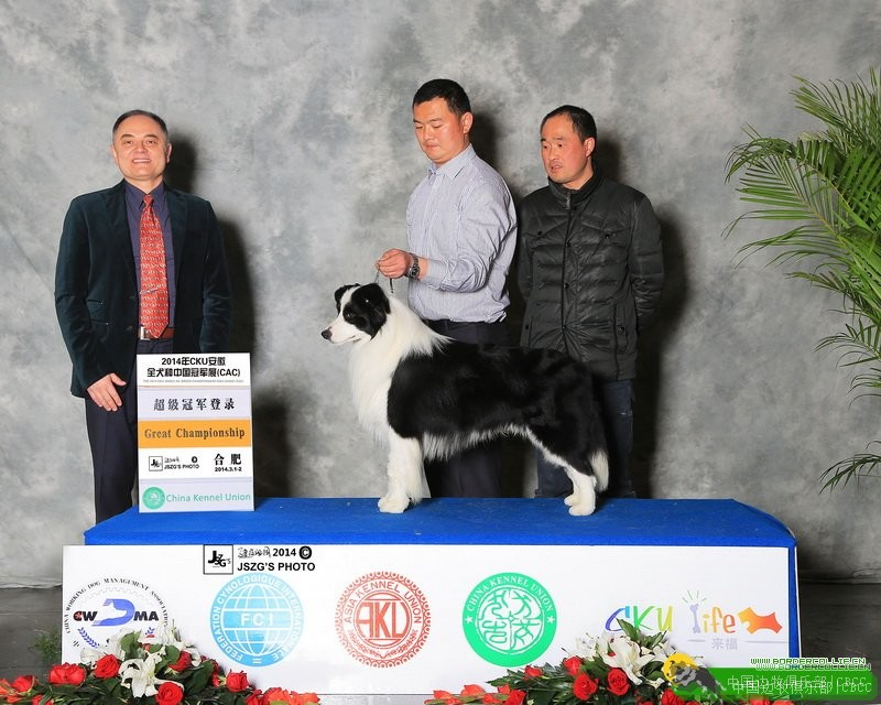 排行榜-中国边牧俱乐部 第3张