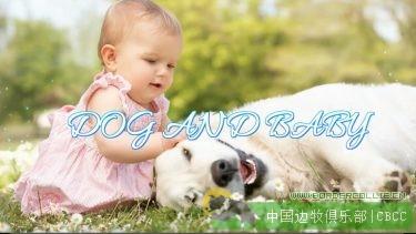 每只边牧都是孩子们最好的陪伴天使,有娃之后就差一只边境牧羊犬了!