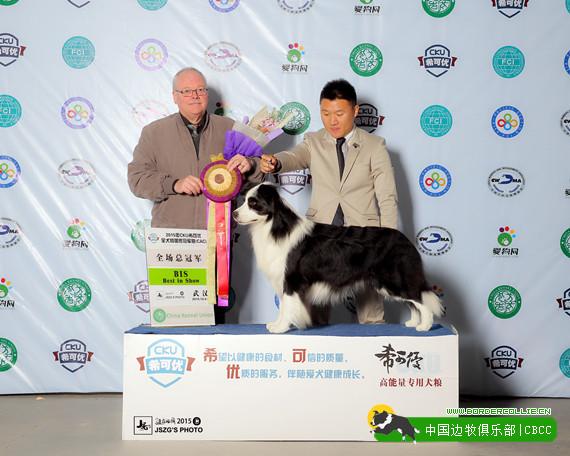 边境牧羊犬名犬-中国边牧俱乐部 第2张