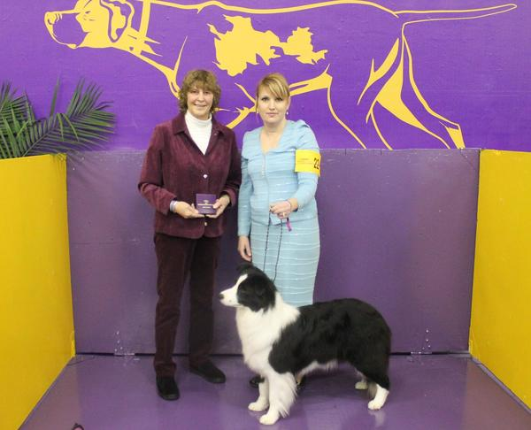 GCH Hollowshot's A Twist Of Fate with her Award of Merit at the Westminster Dog Show